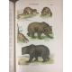 Coutière Henri Le monde vivant Histoire naturelle illustrée 262 planches couleurs Edition originale Bel exemplaire