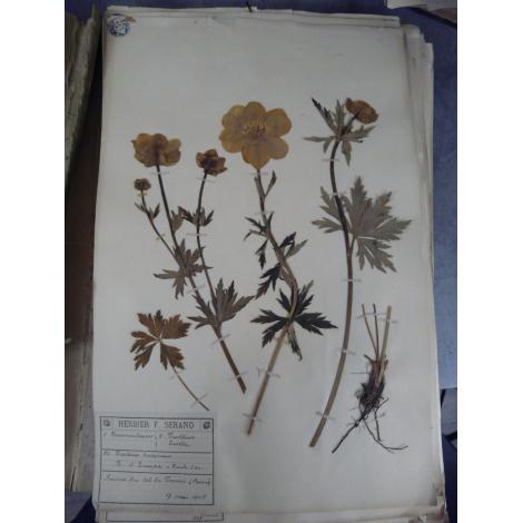 Herbier François, Jules Serand Plantes Alpines et Guinée Savoie, Chambéry, Annecy Flore botanique