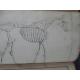 Cardini Dictionnaire Hippiatrique et Equitation Cheval Chevaux art vétérinaire dressage Haras 1848