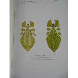 Bordas L. Entomologie Rare Anatomie interne des Phyllies Dédicace à Vialetton Planches couleurs