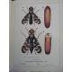 Balachowsky Mesnil Les insectes nuisibles aux plantes cultivés, leurs mœurs leur destruction Agriculture écologie Arboriculture