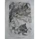 Brehm, Gerbe, Vie des animaux illustrés, Oiseaux 40 hors-texte et nombreuses gravures in texte.