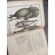 Lacépède [Buffon] Histoire des Cétacées [Cétacés] Baleines Dauphins Cachalots...Edition originale An XII 1804 Rare.