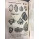 Nouveau Dictionnaire d'histoire naturelle appliquée aux Arts Belles reliures d'époque successeurs de Buffon complet. gravures.