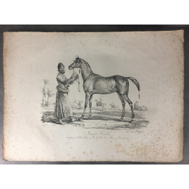 Carle Vernet Grande Lithographie Originale Cheval Horse Jument persanne Delpech