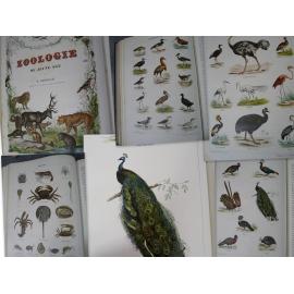 histoire naturelle des animaux Zoologie du jeune age Lereboullet Strasbourg derivaux 1860 [buffon]