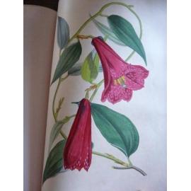 Karr Alphonse, Voyage autour de mon jardin fleurs en couleur très beau